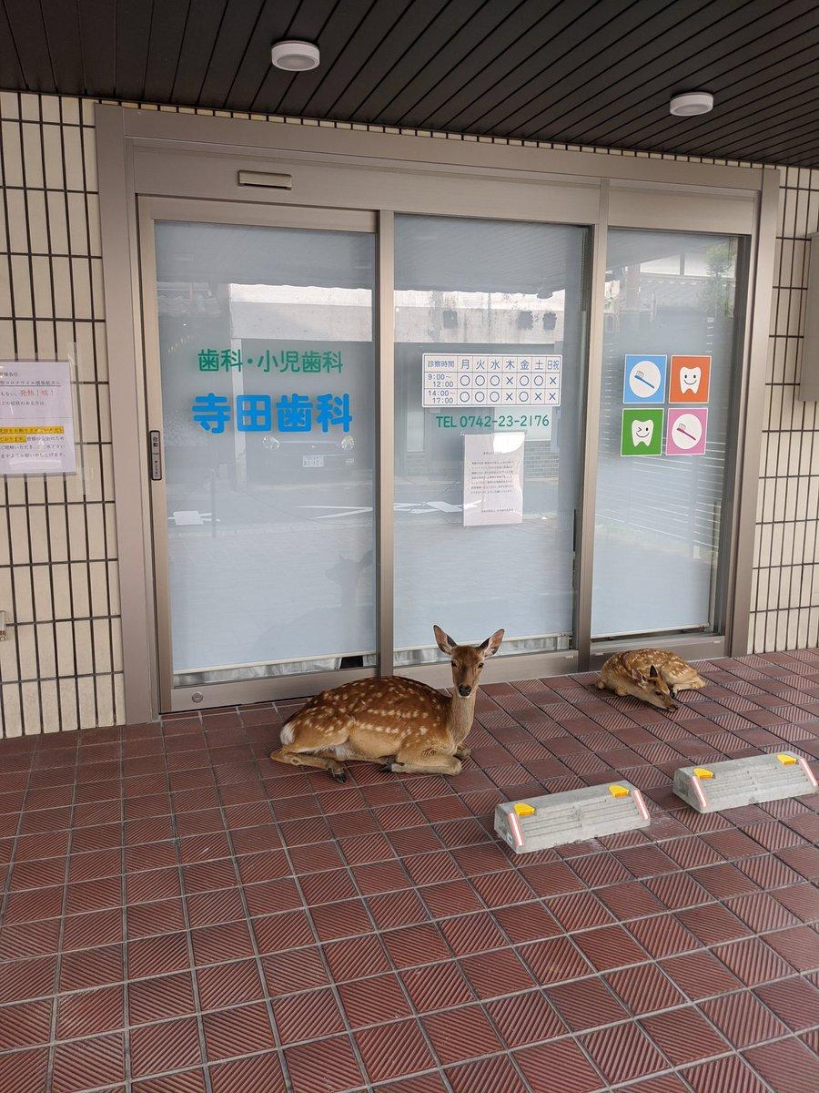 Topics tagged under 可愛動物 on 紀由屋分享坊 Ee4EBXdVoAAHqnh