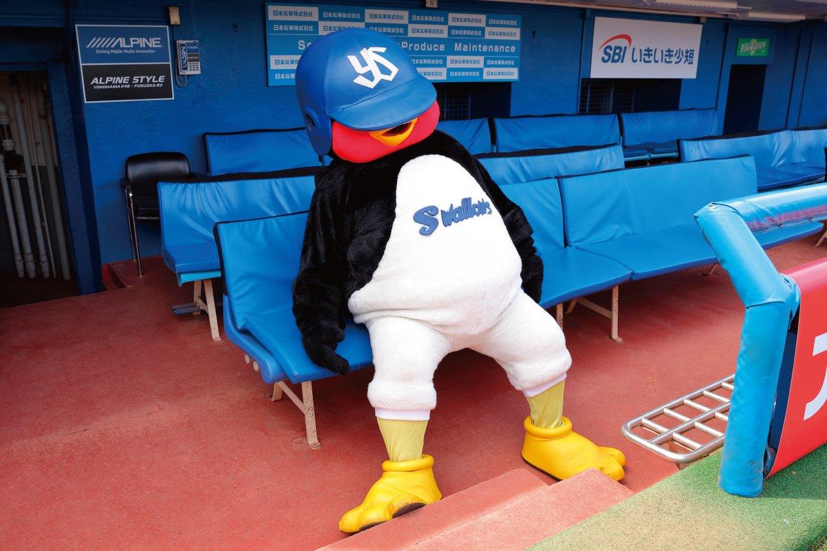 あとぅいですね…みなさんこまめに水分補給を。きょうの試合もフジテレビONEで17:50〜生中継!予告先発は小川泰弘投手です。今日も勝つぞ!スワローズ! #つば九郎 #すかぱーですわほー