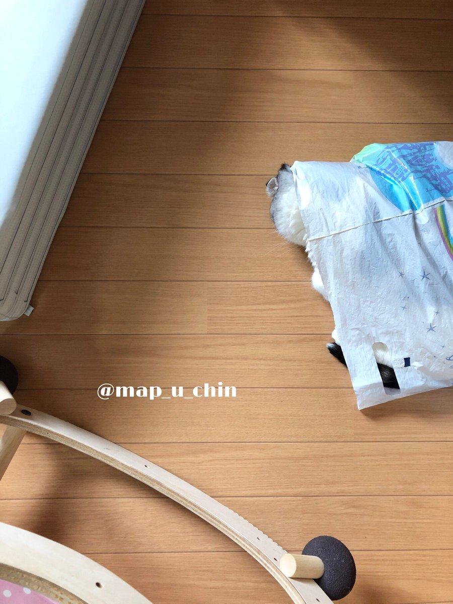 ビニール袋をまとめて入れているビニール袋に入ってお昼寝するのが好きなまっぷーちん。