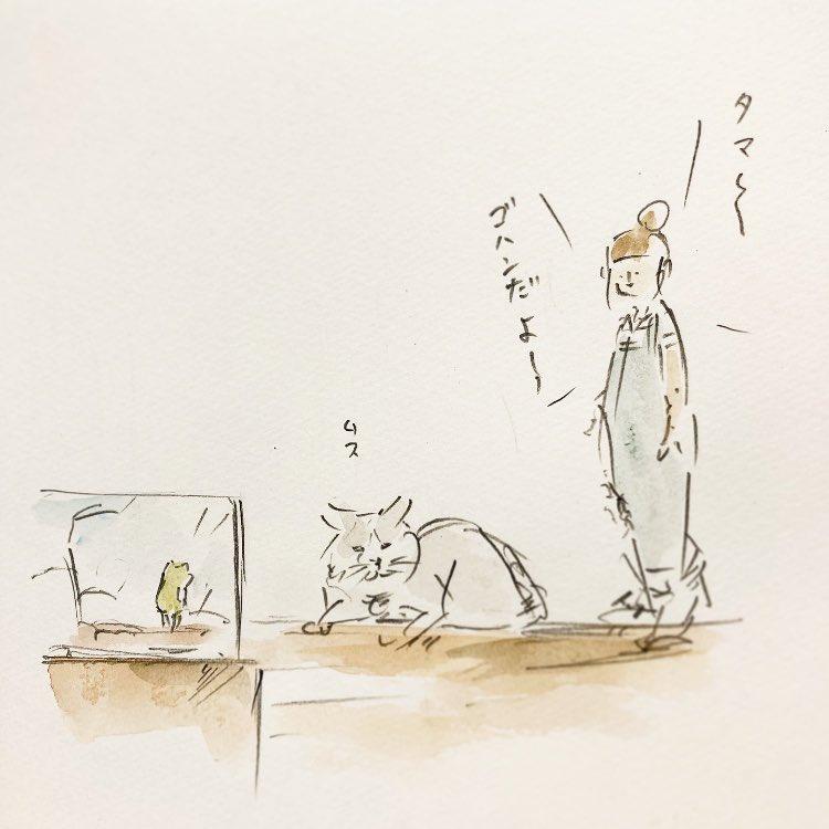 猫とカエル。#世界猫の日