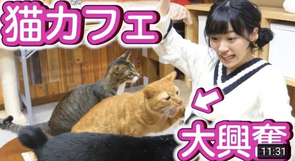 ねこさんに会いたすぎてYouTubeで猫カフェに行った動画をみてる。みんなとっても可愛いのでぜひ🐱♡【ぼっち】一人で猫カフェに行ったら猫ちゃんたちが大暴走...【癒し】  @YouTubeより #あみたYouTube
