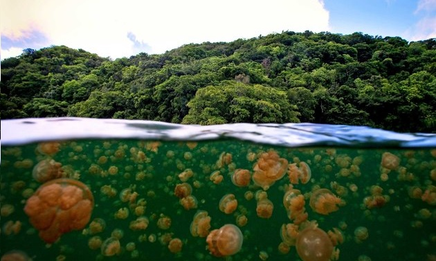 Jellyfish lake in the Philippines contains more than 13 million jellyfish. https://t.co/L3b13oEGcs