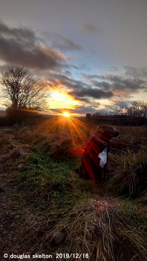 Mickey caught in the setting sun #dogsoftwitter #sunsetphotography pic.twitter.com/CPdiO9T9MU