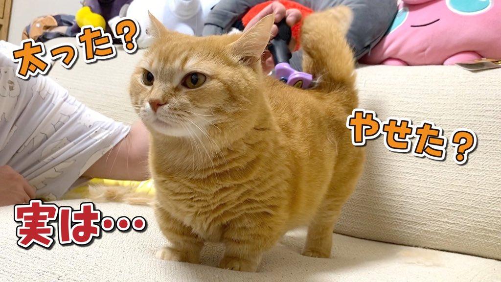 動画投稿しました😊今日は最近コメントで多いプリンの体重について改めて動画にしてみました!オマケも可愛いです❤️見てね〜🐈🐾