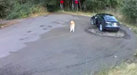 Cane abbandonato in strada, il momento del gesto disumano (VIDEO) - https://t.co/UxfBpNIziP #blogsicilia #portland #usa #dog #dogs #cane #cani