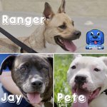 Image for the Tweet beginning: Meet the 3 pups we