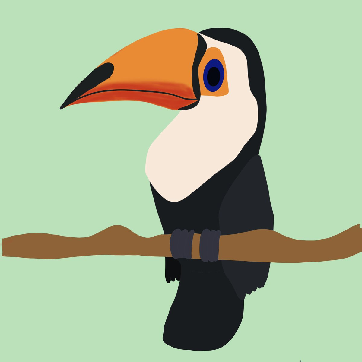 #Toucan - tropical American forest birds known for their large and strikingly coloured bills. #procreate #DigitalArtist pic.twitter.com/TjNZ9phOyo