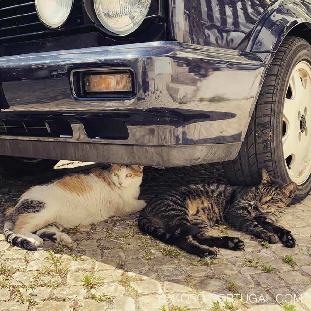 test ツイッターメディア - 車の下でお昼寝中の仲良しな猫。 #リスボン #アルファマ #ポルトガル https://t.co/tzjQcSvaY0