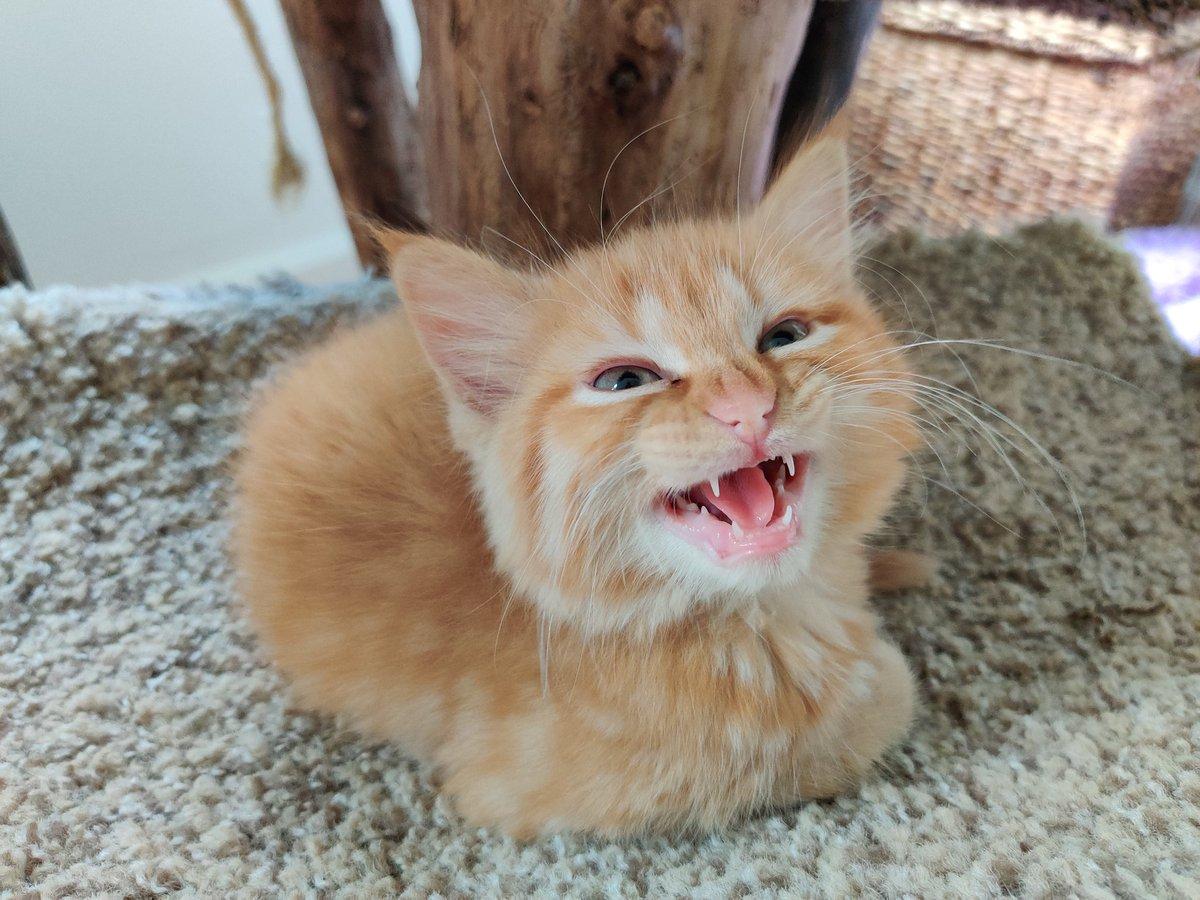 Kitten Academy On Twitter