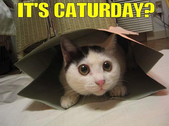 #caturday #saturday #webdesign #supportlocal #mobilealabama #smallbusiness #weekendvibes #weekend #internationalcatday  https://mobilewebdesignal.com/ pic.twitter.com/qKqhcuMfO5
