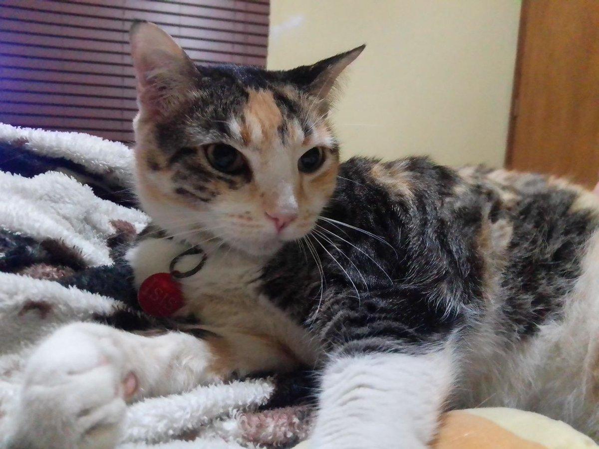 Hoy extraño mucho a mi gata así que les comparto las fotos que me envía mi hermano de ella. https://t.co/2nFsPkpPvM