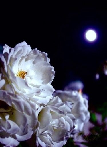 Good night friends. #moon #moonlight #naturelovers pic.twitter.com/57RF1JCcZI
