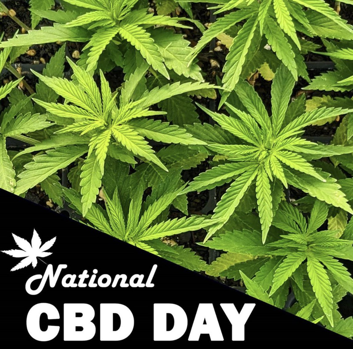 Happy national CBD day#cbd #CBDcommunity #conroe #conroetx #thewoodlands #SaturdayVibespic.twitter.com/ph2n9KQWhO