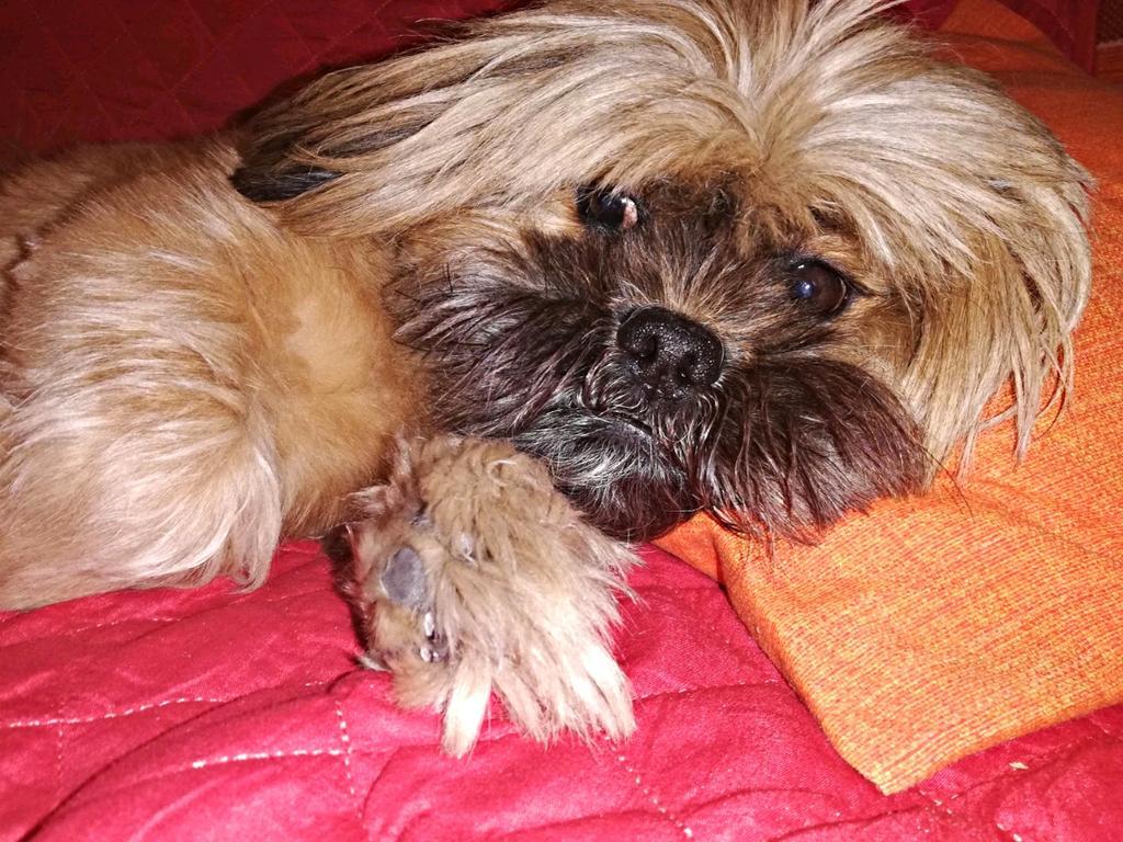 Un altro po di Pippo Zingale  #pets_of_instagram #doglove #lovepuppies#instagramdogs#doglover#ınstadog #dogs_of_instagramd #petdogslover #lovedogs#ilovemydogg #instapuppydogs #puppylife #dogsittingdiaries #ᴘᴇᴛsᴛᴀɢʀᴀᴍ #dogstagramm #eyesdogs #prilagapic.twitter.com/K0V5NyWjKQ