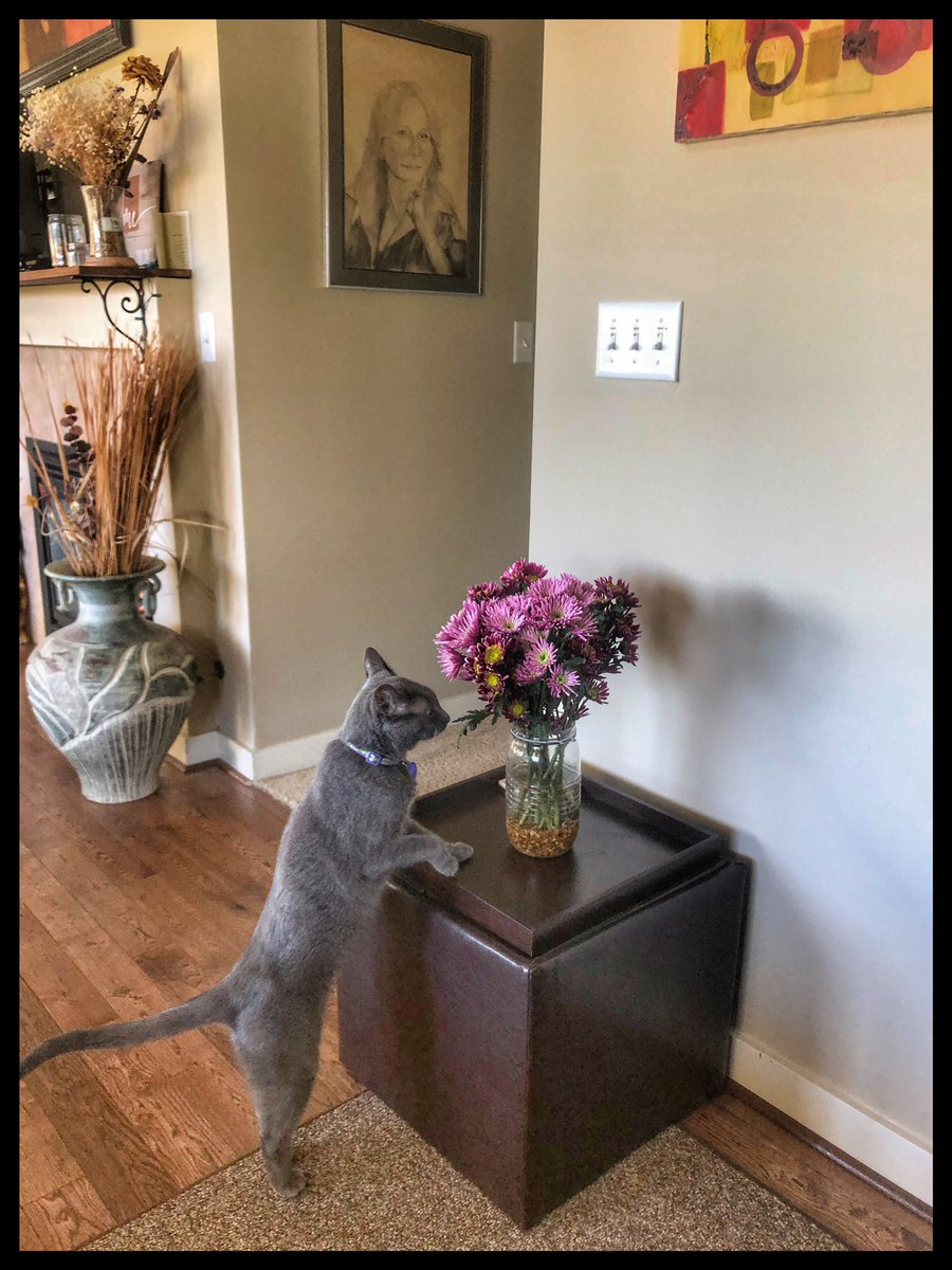 Stop & smell the flowers everyday!  Happy #InternationalCatDay to two of my favorite cats - Rollie & @DrSeuss #catinthehat #Caturdaypic.twitter.com/7ZNNpjy3P8