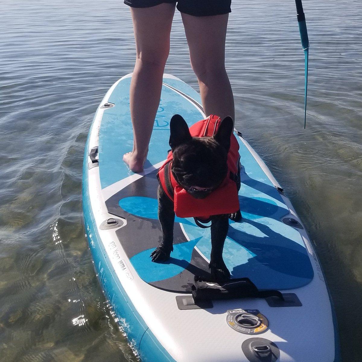 Ready to go!!  #kona #paddleboarding #lakelife #summertime #frenchiespic.twitter.com/E9Bh2m0QWI