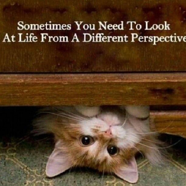 This kitty  is in the #SundayFunday spirit offering sound advice with a bit of quiet reflection thrown in for good measure! What's your Sunday looking like?? @CharityTBF @kosbornphoto @raze @ColemanOptician @angliacomp #norfolk #buylocalnorfolk #sundayvibes #mindsetmatters pic.twitter.com/jsDcrZVck1