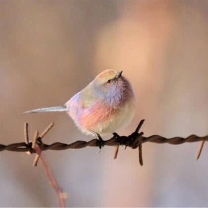 彩虹鳥 EeAMd1FUEAEUgTP