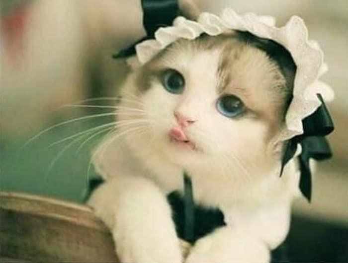 絵に描いたような美猫!キレイな瞳に見惚れてしまう…!