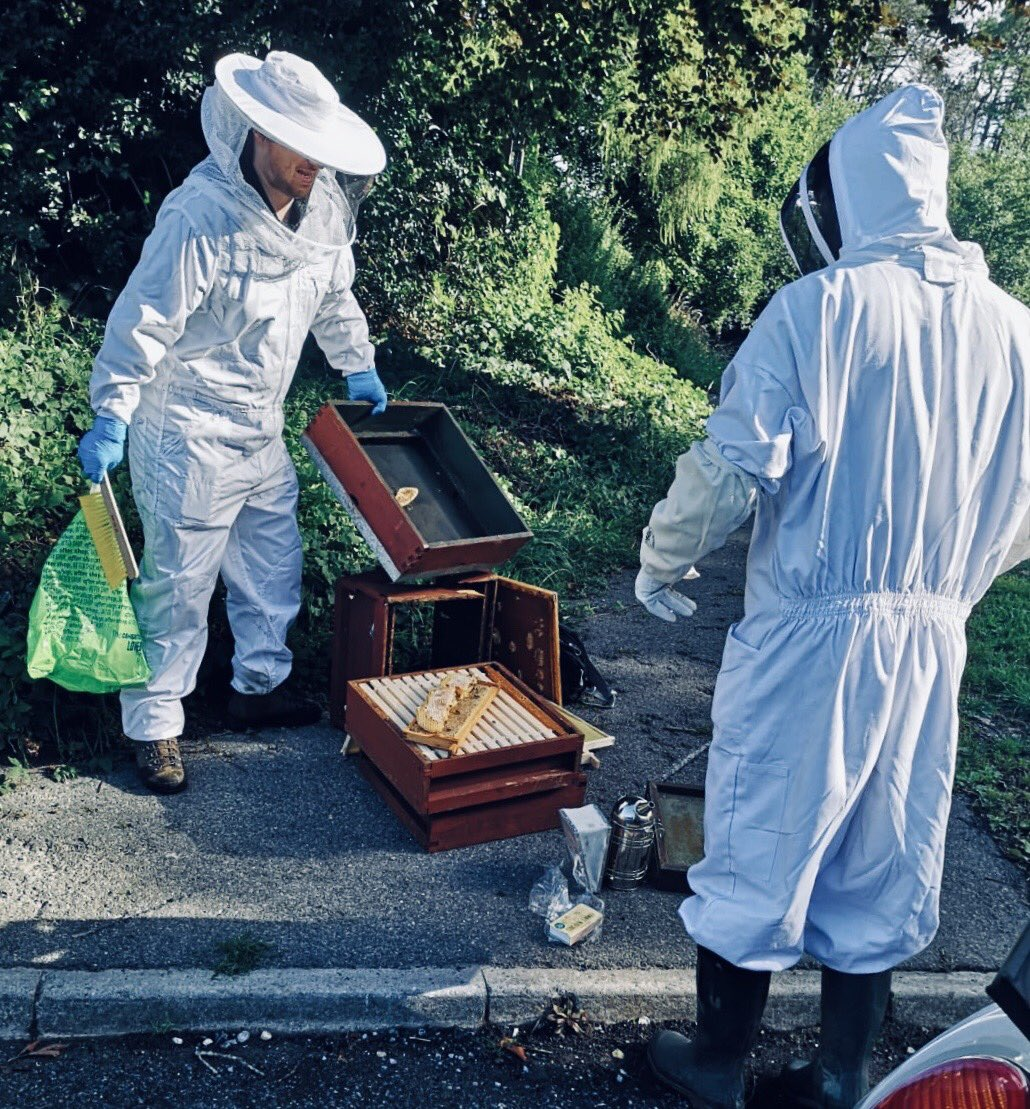 The school bees receiving attention from our intrepid apiarists....