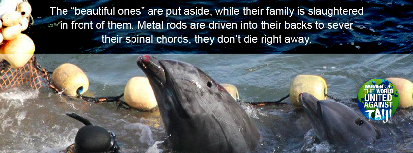The beautiful ones are put aside whilst their family members are slaughtered using metal rods driven into their spines. The Fishermen try to conceal the kill under tarps #WOWvTaiji #Taiji wowvstaiji.com Trying to conceal what they know is wrong!😡