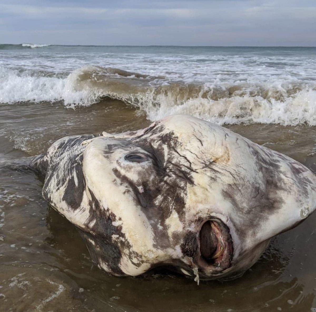 'Hết hồn' phát hiện sinh vật khổng lồ như quái vật trôi dạt vào bờ biển