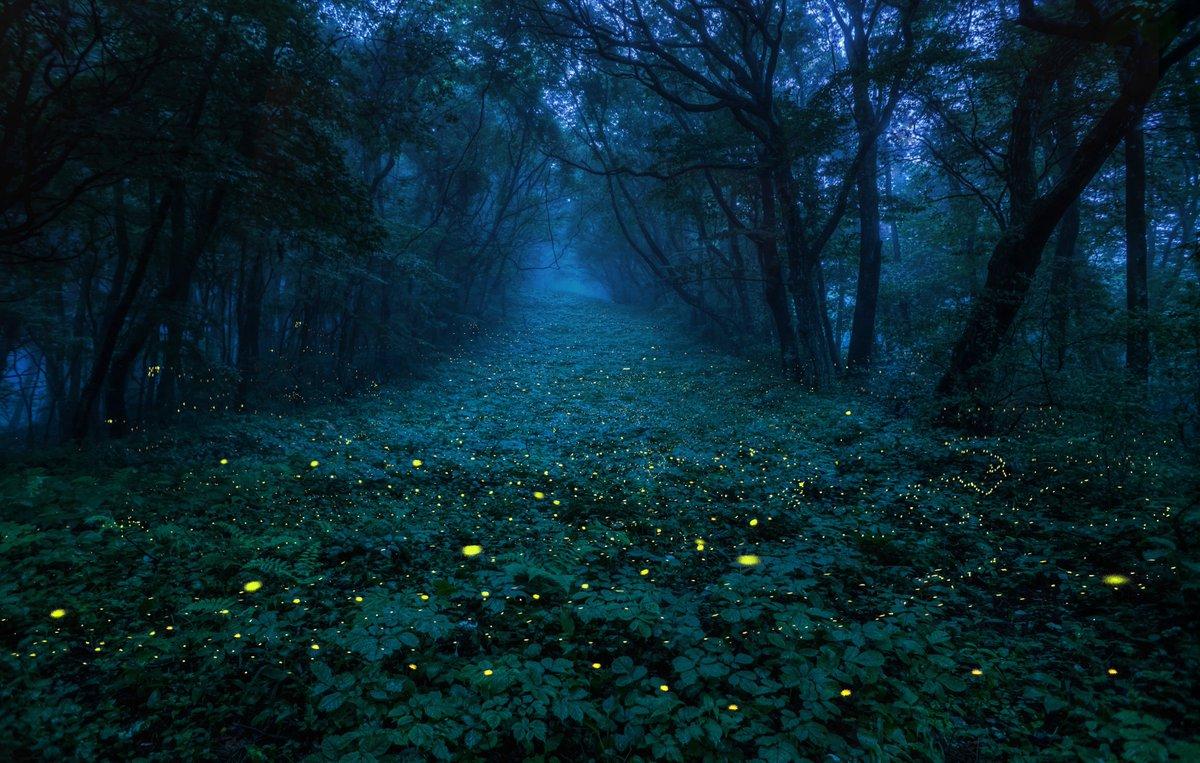 2020.7.11〜24 宮城県某所にて撮影  子供達に伝えたい 残してあげたい 大切なふるさとの風景です。  今年も出会えました! 超感動! 霧の中で舞うヒメボタルは とっても幻想的でした。 比較明合成 8枚   #宮城県  #写真好きな人と繋がりたい  #landscape #自然景観 #ふるさとの景色 #ヒメボタル https://t.co/JvfemZgOCa