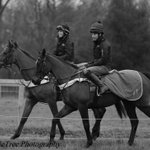 Image for the Tweet beginning: Looking for an exercise rider/groom