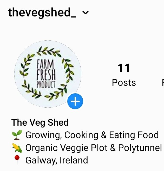 Giving @instagram a whirl 🌱 Follow thevegshed_ to follow all that's happening in our local allotment 🤠