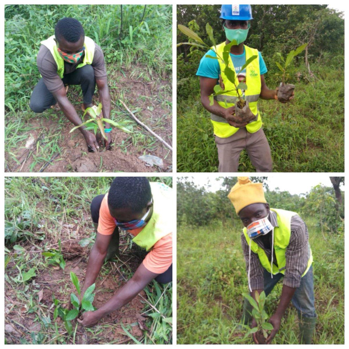 Les VEC de Mô 1 (Djarkpanga) ont mis en terre 137 plants composés des anacardiers et des manguiers, ce 27 Juillet   L'objectif est de lutter contre le réchauffement climatique et de prouver leur engagement pour la  protection de l'écosystème.  #VEC #JeMengage #CRVCentrale #ANVT https://t.co/8gyIFwvFyG
