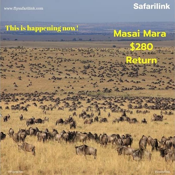 This is happening now! Take advantage you could soon be here! #flysafe #Flysafarilink #wildlife  #masaimara https://t.co/CWuOo1Kip5