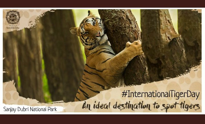 On this International Tiger Day, Let's take a pledge to conserve wildlife   and protect our national animal.The best is to stop deforestation.  Live and let live.  #InternationalTigerDay https://t.co/RfapRLGdha