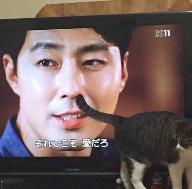 貓X電視四天王 EeGFhmfUEAIZiy6