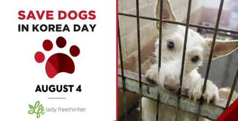 'SAVE A DOG IN #SOUTHKOREA DAY'  TO RAISE AWARENESS OF THE #DogMeatTrade  SEND SHARE A PIC OF YOUR PET!  EVENT by @LadyFreethinker   AUGUST 4, 2020 https://www.facebook.com/events/s/save-dogs-in-korea-day/1166329550409649/… https://ladyfreethinker.org/save-a-dog-in-korea-day-august-4/…  #EndDogMeatTrade #SaveKoreanDogs #StopBokNalpic.twitter.com/XcLWO8OIfS