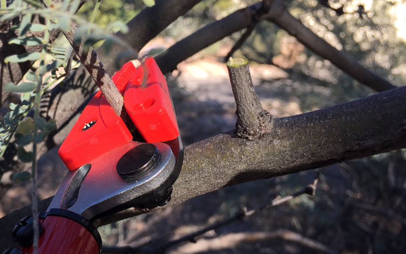 This stick pruner from @coronatools has a way to help you make clean cuts (unlike the one shown here). See how at the link>> http://bit.ly/2Goj60v  gpreview #coronatools #stickpruner #pruningtools #pruningtipspic.twitter.com/qjzhNQqJM1