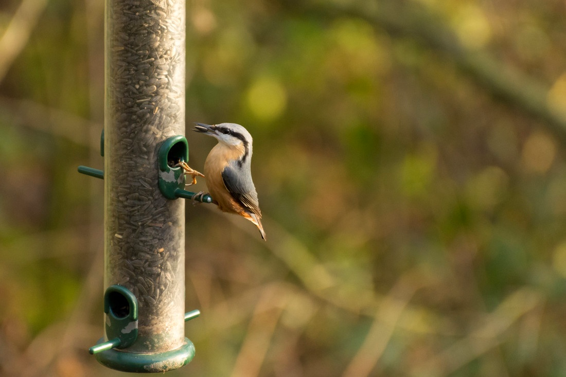Help biodiversity fight back ✊ 🌍 ACTION #3: Provide food and water for birds and grow pollinator-friendly plants to provide a mid-flight snack for passing insects. #WetlandBiodiversityMatters