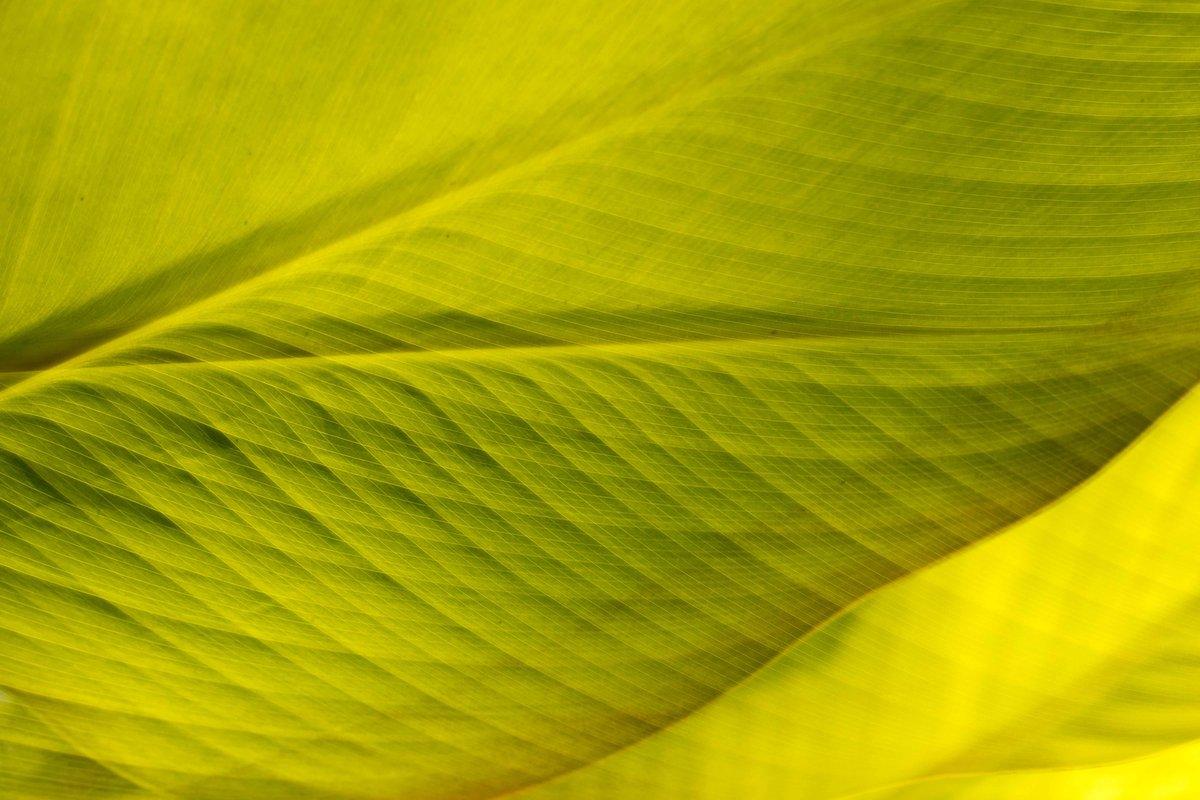 'Keep close to Nature's heart' -John Muir- . . . . #leaves  #peaceandquiet  #macrophotography  #thislovelylife  #dof_brilliance  #explore_dof  #macro_nature_spirit  #marvelouz_worldpic.twitter.com/zjfnYYmNPZ