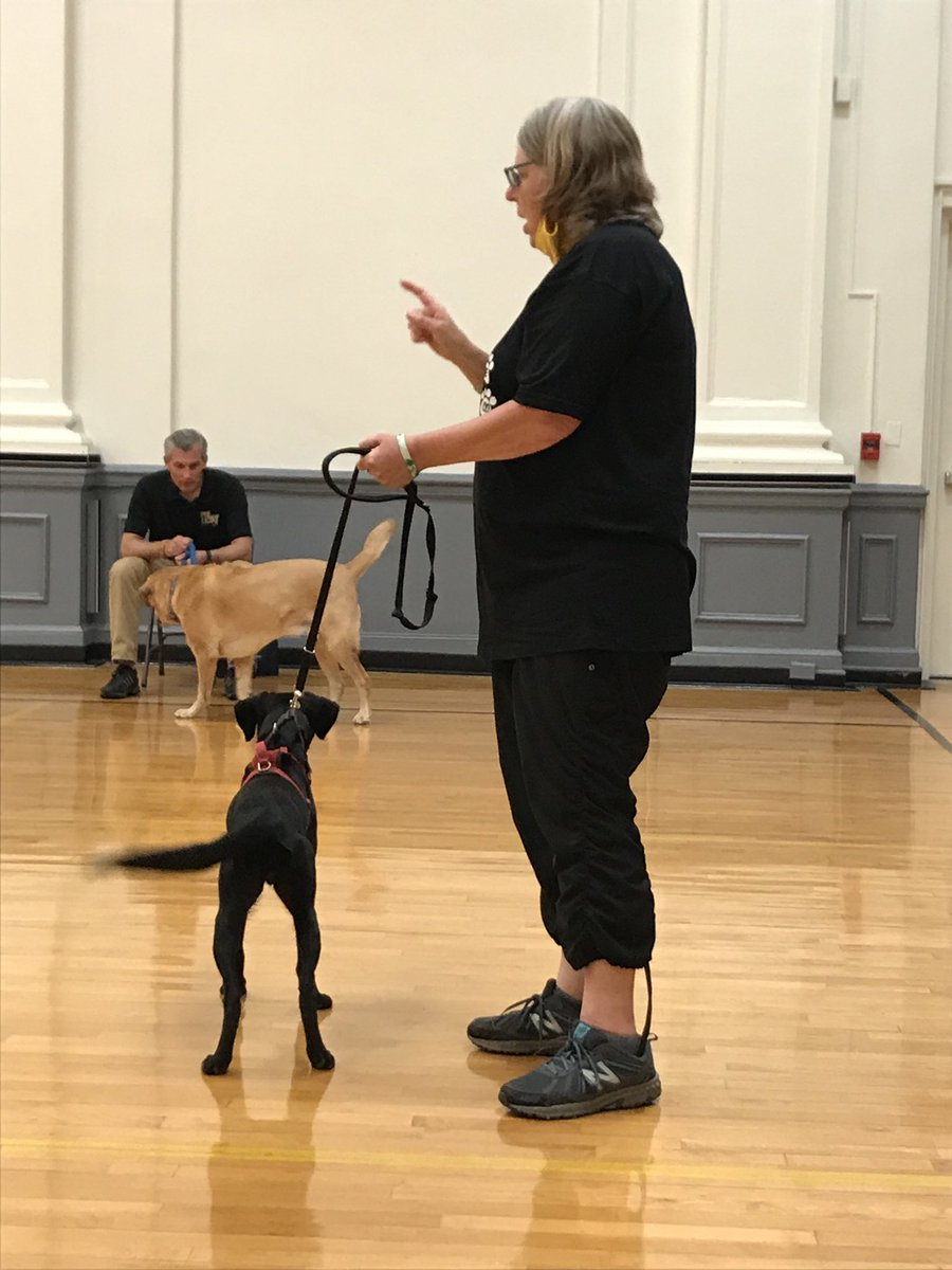 Maisy did great today learning to sit & stay down! #therapydogs TY Trish from Attitudes In Reverse #air pic.twitter.com/UFS9eAhgeq