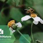 Image for the Tweet beginning: This month's #CitiesWithNature BUZZ featured