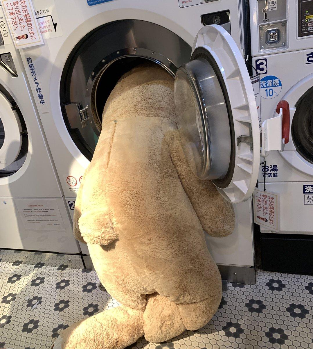 洗濯 ぬいぐるみ