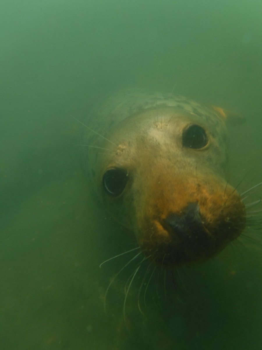 I met up with this curious seal yesterday 😀 https://t.co/O2KvAtwn08