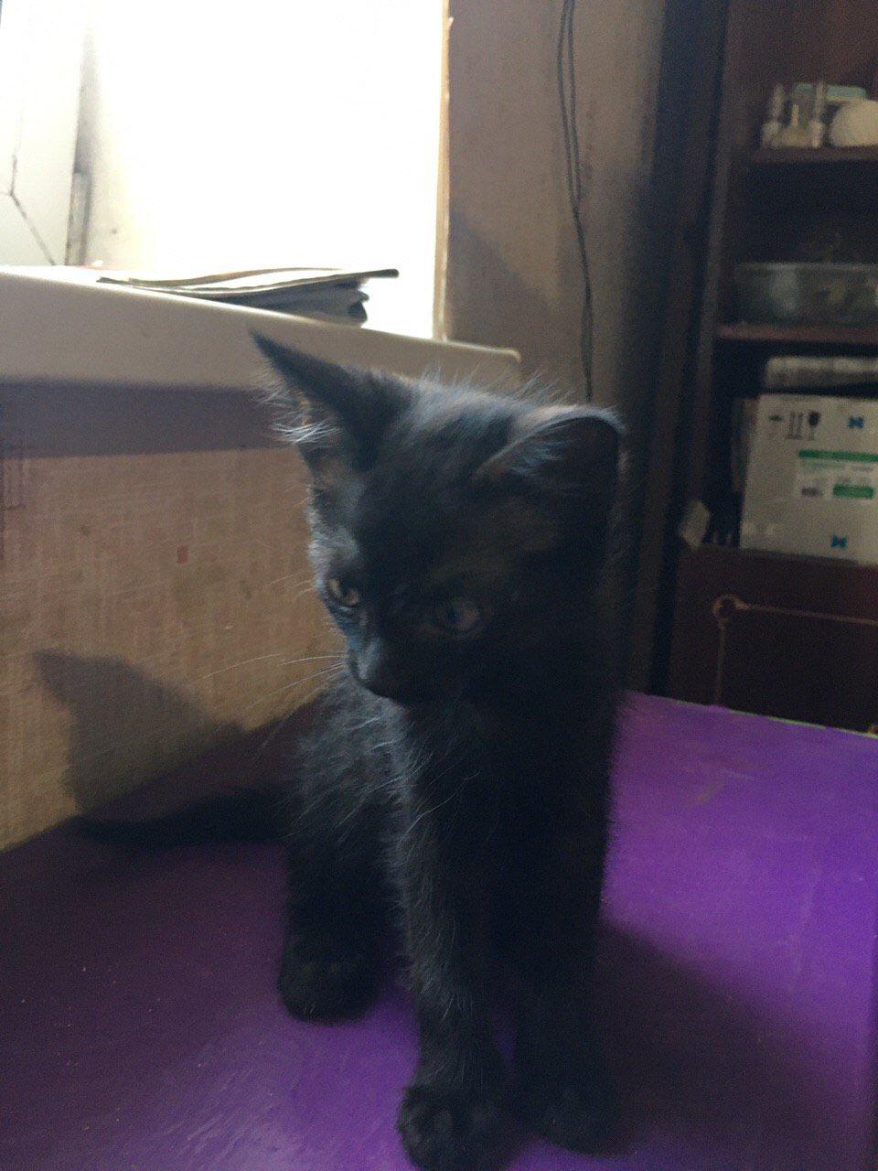 Два міні-кошенятка потребують турботи