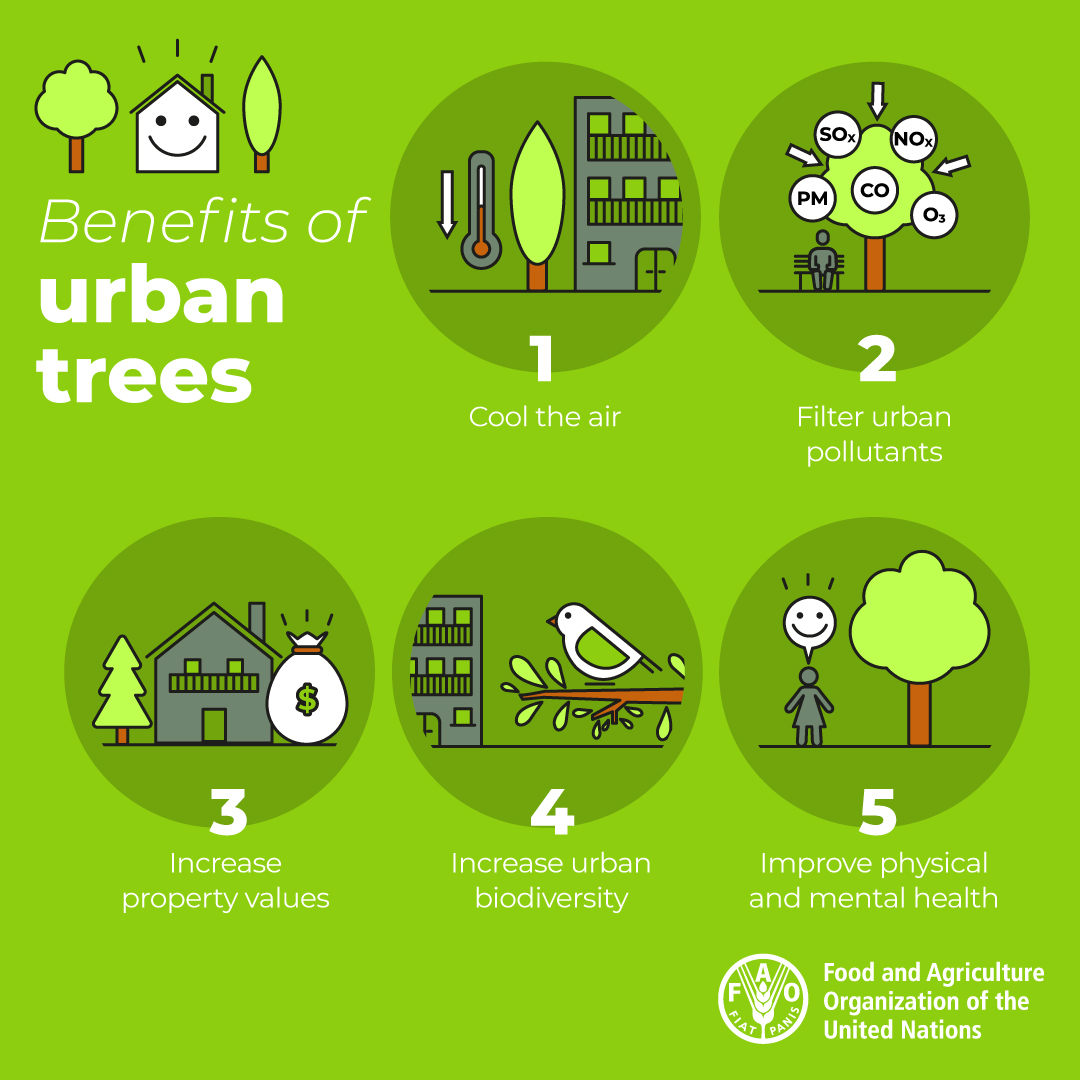 🌲🌳🏙️🌲🌳 #Trees and urban forests can make our #cities greener, healthier and happier places to live.