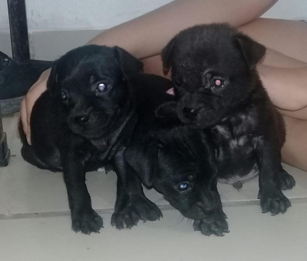 Se regalan perritos #Culiacán Informes por DM pic.twitter.com/LrbTpwGW9K