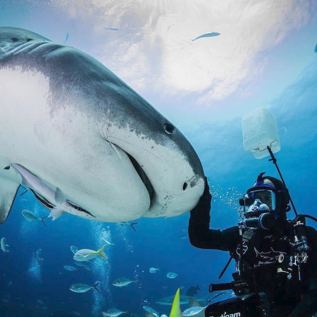 Wild shark immediately recognizes her human best friend and asks for belly scratches   Need more sharks in your life? @SharkWeek starts August 9 on Discovery! #ad   Get all the details here: http://thedo.do/discoverysharkweek ….pic.twitter.com/8iFVwsAnzn