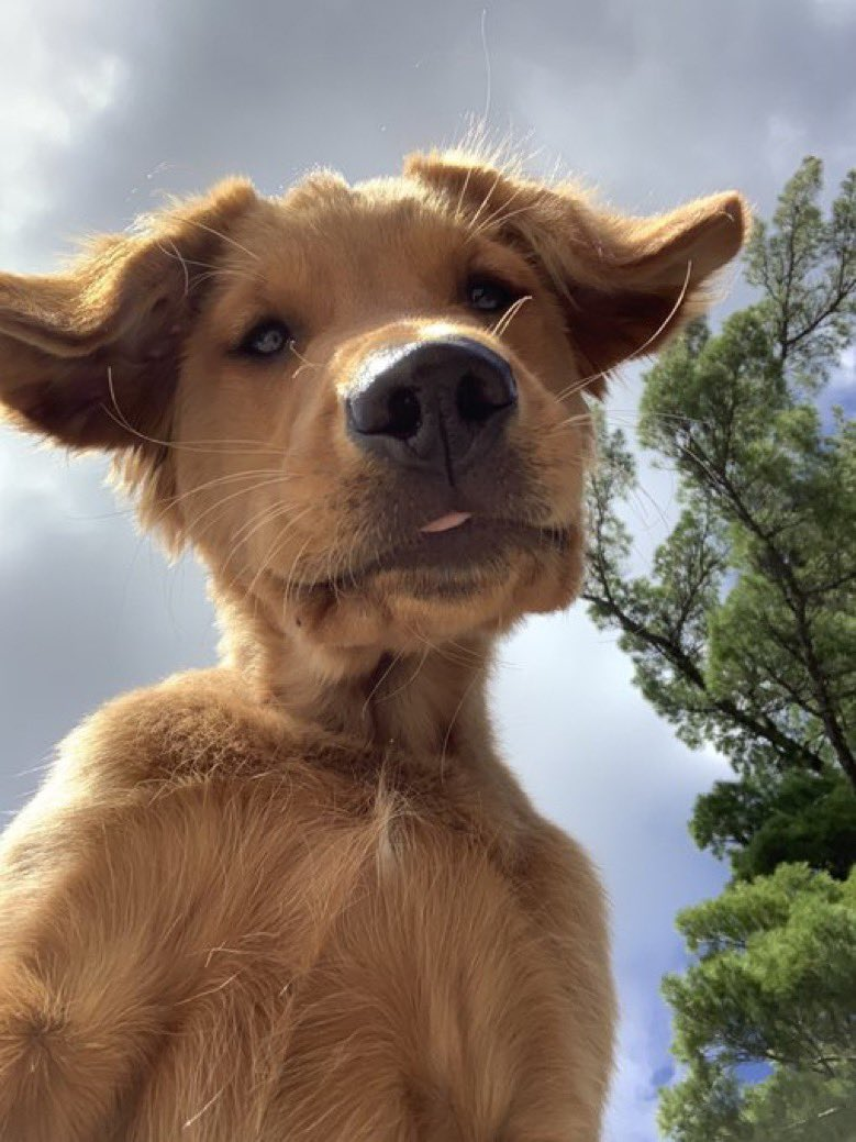 This is Buddy. He found a phone in the park and decided to leave a selfie on it. 12/10