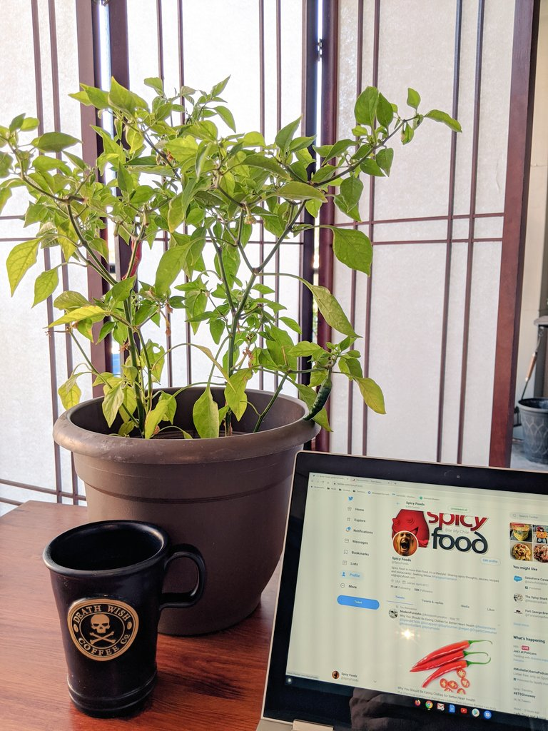 When your coworker is a cayenne chile plant #workingfromhome #spicyfood #Garden https://t.co/w8xhOE8RPH