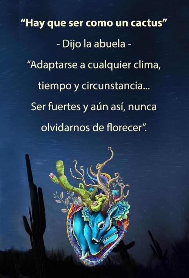 Adriana On Twitter Yocambioa Ser Como Un Cactus