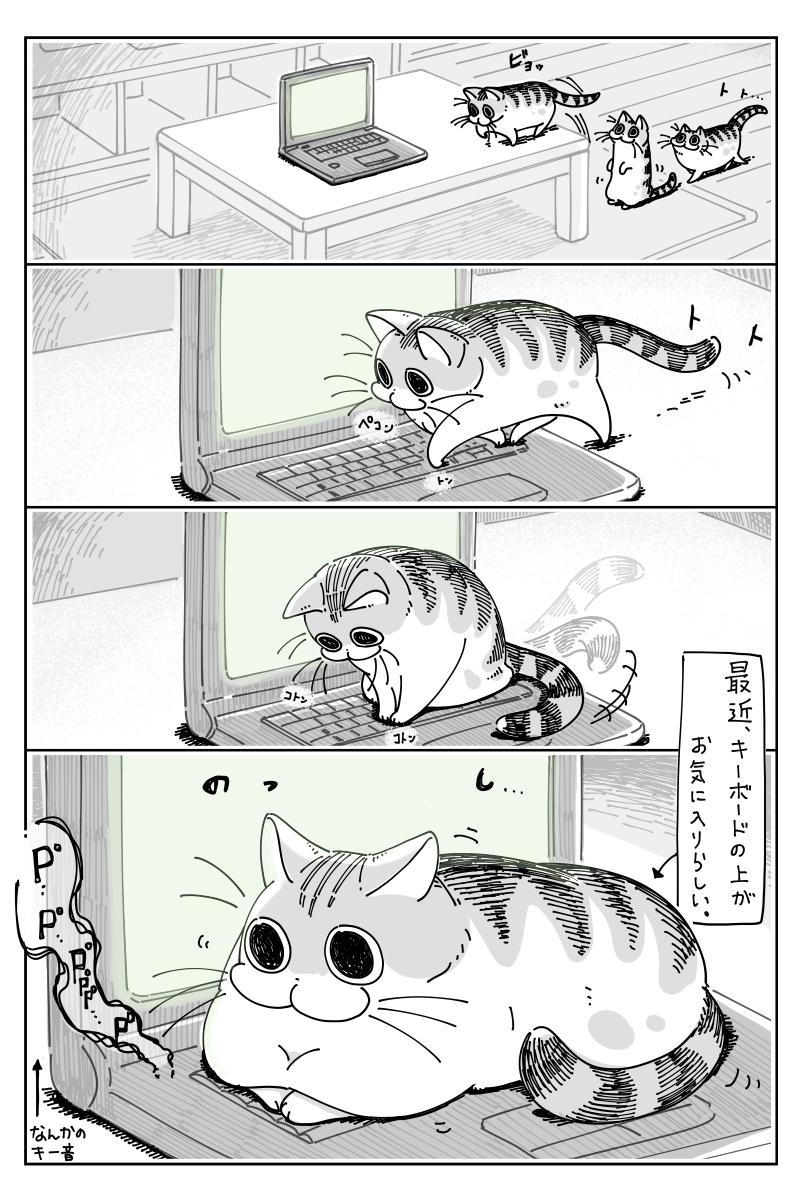 キーボードの上に乗る猫だけど?キーボードを打つ様子を想像して思わずほっこり!