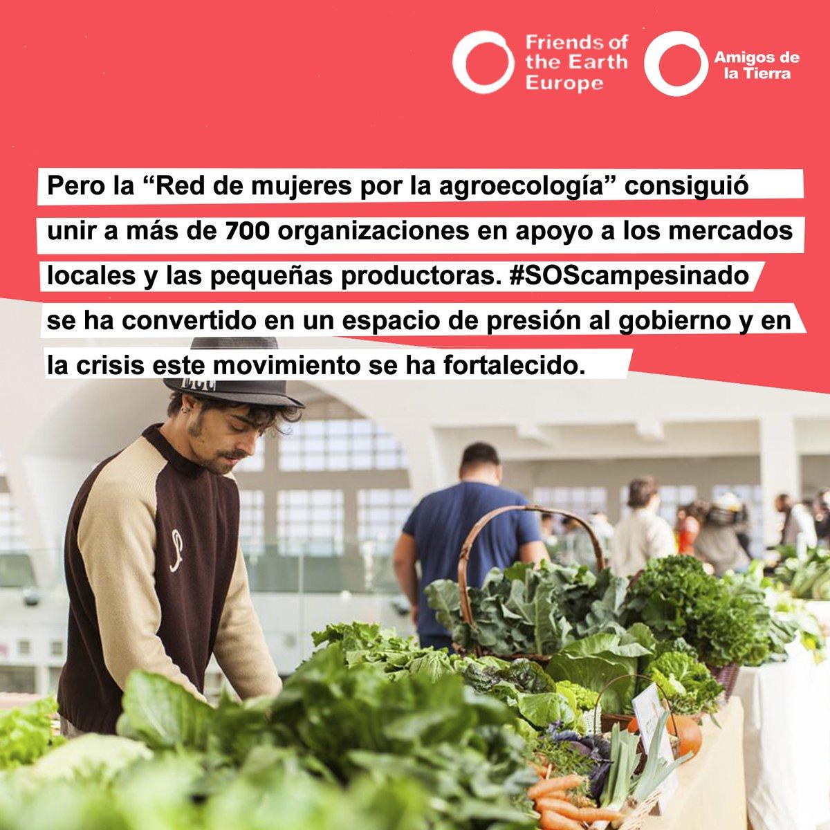 La crisis del Covid-19 ha sido la oportunidad para seguir construyendo movimiento y visibilizar el derecho por una alimentación agroecológica. #COVIDSolidarity #COVIDSolidaridad #SOScampesinado #PeoplePower @foeeurope https://t.co/lxr8B57YFY